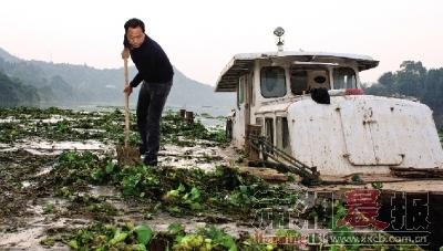 浏阳市普迹镇,当地政府组织人员清理打捞水葫芦。
