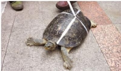 ▲12月5日,长沙市芙蓉中路,一男子在路边售卖乌龟,据男子称乌龟有300多岁了。