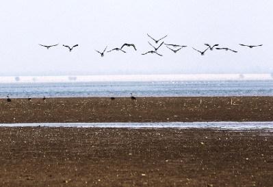 12月4日,岳阳采桑湖,冬日暖阳下,一群候鸟在嬉戏。