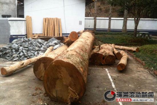 被砍的楠木放在浏阳市森林公安局张坊派出所。