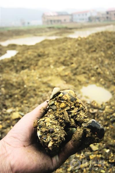 农田里全是砂石,一位老农备感惋惜 见习记者 熊威 摄