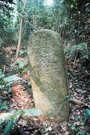 经历数百年的风雨侵蚀,吴道行简约墓碑已隐没在树丛中。胡滔滔 周和平 摄影报道
