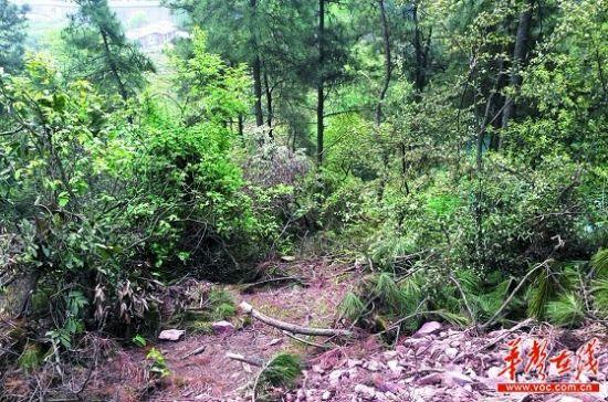 4月15日,长沙岳麓山桃花岭风景区。在清理火灾后现场时,伐木工罗师傅发现一具白骨。   记者 王�鹰 摄