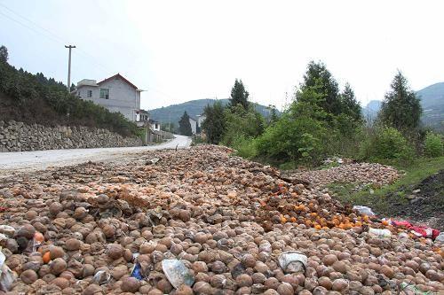 4月19日,湘西土家族苗族自治州古丈县的乡间道路上倾倒着大量腐烂的�崭獭�