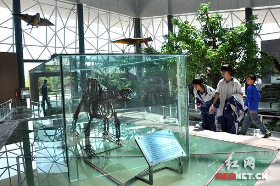 无齿芙蓉龙骨架化石,全世界仅有三具
