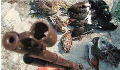 不法分子在候鸟迁徙的线路上用天网、猎枪等工具猎杀候鸟。 新华社 图