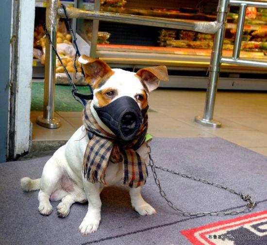 见过穿衣服的小狗,也见过戴口罩的小狗