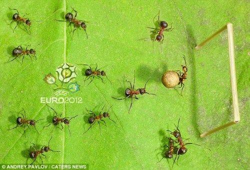 """蚂蚁""""模特""""很配合摄影师,似乎正围守球员欲夺球"""