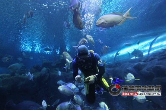 """长沙海底世界给鱼儿吃""""粽子""""过端午(图)"""