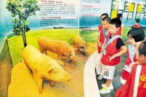 """在唐人神集团猪文化博物馆,校园记者正好奇地观看几头栩栩如生的""""小猪""""。据介绍,这些猪都是真猪标本。陈飞 黄友庆 摄影报道"""