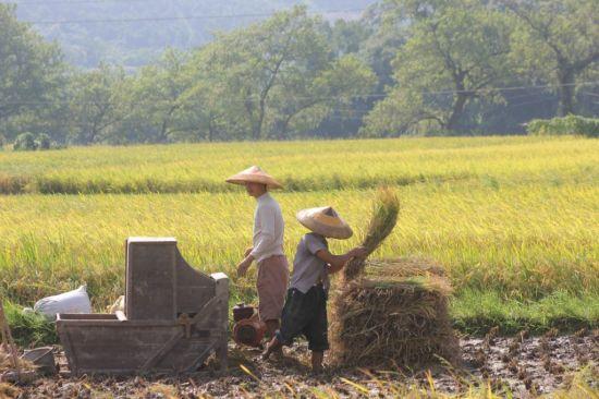 晓江口村劳作中的村民们