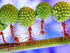 微距拍蚂蚁搬运种子场景:力量惊人似杂耍