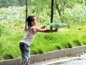 落下的雨滴打在花瓣上,站在桥下躲雨的小朋友摘下荷叶、翘起屁股,神情专注地收集着滴答滴答的小雨。