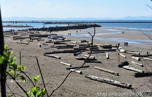 岸边有很多木头