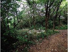 周克华曾经藏匿的天马山墓地。山上树林茂密,山脚下最近的小路离周克华经常上网的网吧距离大概400米。图/记者辜鹏博