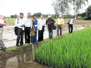 在印度海德拉巴的拜尔公司杂交水稻示范基地,袁隆平和当地的水稻专家一起查看杂交水稻生长情况。李杜摄
