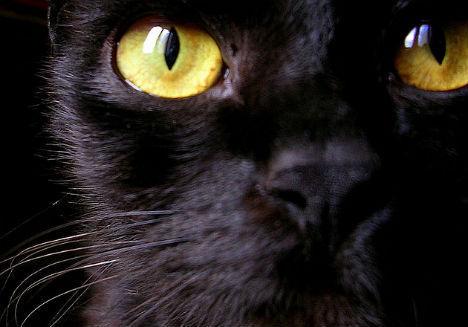 可控制人类大脑的猫窝寄生虫