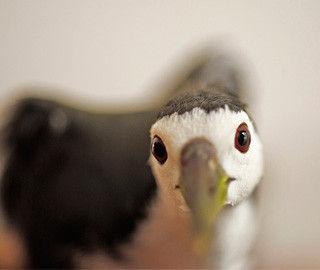 记者亲历湖南千年鸟道捕猎之殇