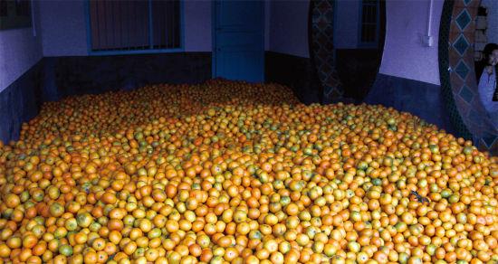 10月23日,常德市石门县秀坪镇,橘子交易市场小仓库,橘子堆积如山。今年橘子的销售比往年更加艰难,不少地方的橘子园甚至还未开剪。图/记者华剑