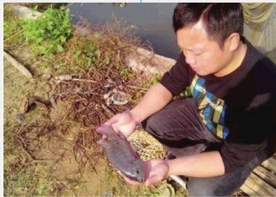 11月6日,望城乔口镇,汪林祥看着池塘里的上万斤非洲鲫鱼,一脸惆怅。 采访对象供图