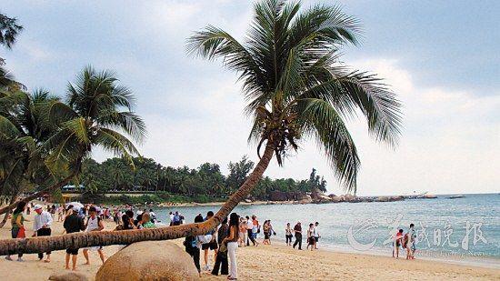 三亚的椰林树影 刘星彤 摄