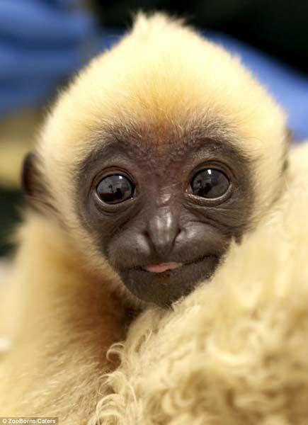 世界上濒危动物宝宝照片秀(图)