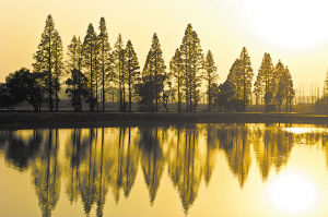生态与宜居是洋湖湿地的代名词