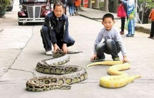 """遛蛇哥和他的""""家庭成员"""""""