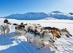 冰原探险!走进格陵兰岛因纽特人的生活