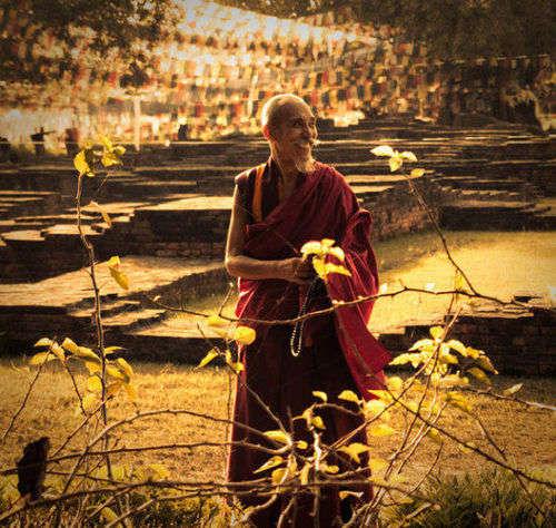 他们不远万里从世界各地而来,只为在那棵佛陀诞生的树下浇灌一壶灵泉