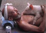 与猪共生 超有爱的日本养猪大爷