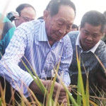 袁隆平:花生粒大小的大米