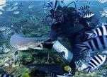 斐济海下近距离接触鲨鱼