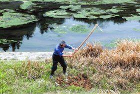 3月15日,株洲市天元区三门镇白石村,当地政府组织村民把渠道里打捞上来的死猪就地掩埋。本报记者陈正摄