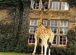 走进世界唯一的长颈鹿旅店
