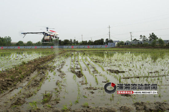 4月16日,长沙市望城区组织10架无人驾驶直升机在新康乡的农田里一展身手。图/潇湘晨报滚动新闻记者 谢长贵