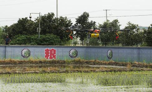 望城区组织10架无人驾驶直升机给农田撒药