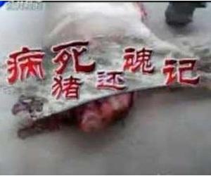 """政府雇员卖病死猪肉不能只究""""个人行为"""""""