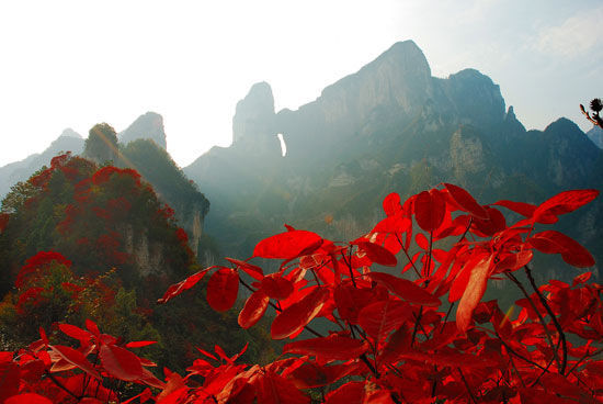 天门山红叶