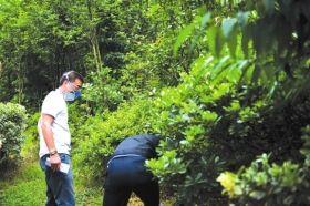 6月20日,株洲市石峰区响石村,法医在勘察现场。 本报记者陈杰摄