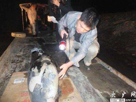 洞庭湖水域再现江豚死亡事件