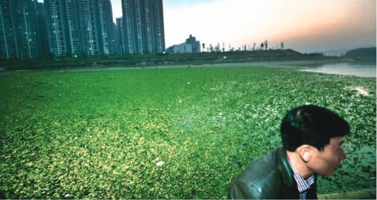 11月19日,长沙市捞刀河湘江交汇处,水葫芦覆盖整个河道,向湘江漂去。 记者 李丹 摄