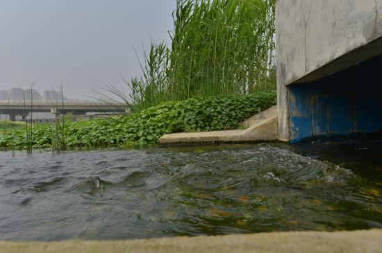 4月16日,经洋湖垸再生水厂处理后的水注入河流