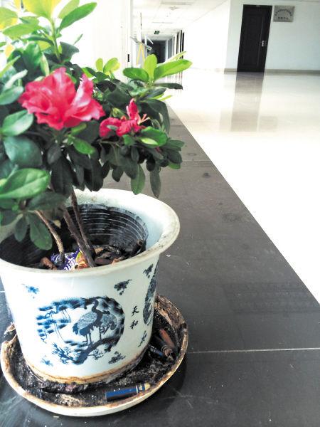 5月27日,在长沙市政府第二办公楼10楼的走廊上,盆栽里面满是烟头。   聂映荣 摄
