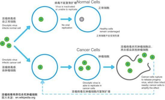 分子克隆和基因工程等技术的建立使得科学家在分子