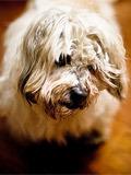 长沙一宠物狗将迎20岁