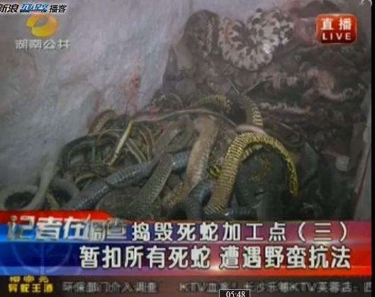 视频:长沙西长街民房加工死蛇窝点被端