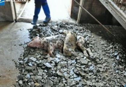 冰雹侵袭湖南等地 民房开天窗小猪被砸死